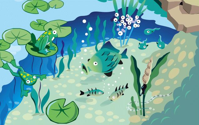Der teich kinder for Was brauchen fische im teich