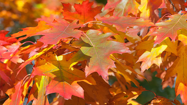 Klassewasser De Natur Im Herbst Kinder