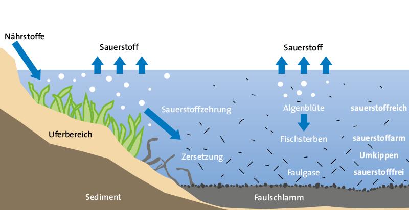 klassewasser.de Eutrophierung eines Gewässers - Jugendliche